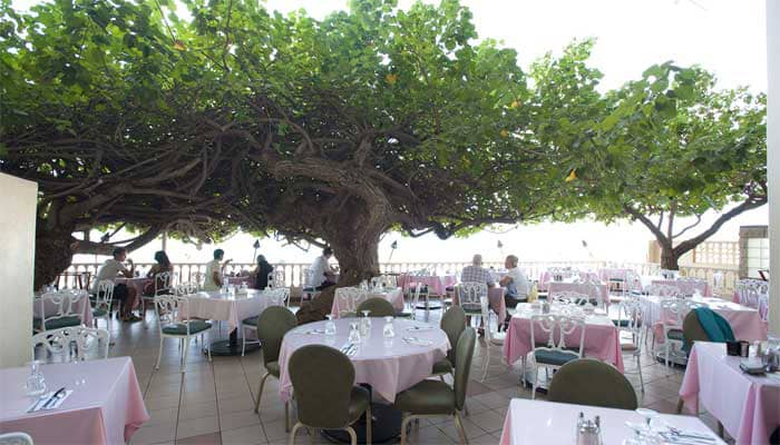 Hau Tree Lanai